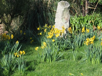 Granite post focal point with spring daffodils