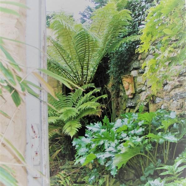 Tree ferns through a doorway