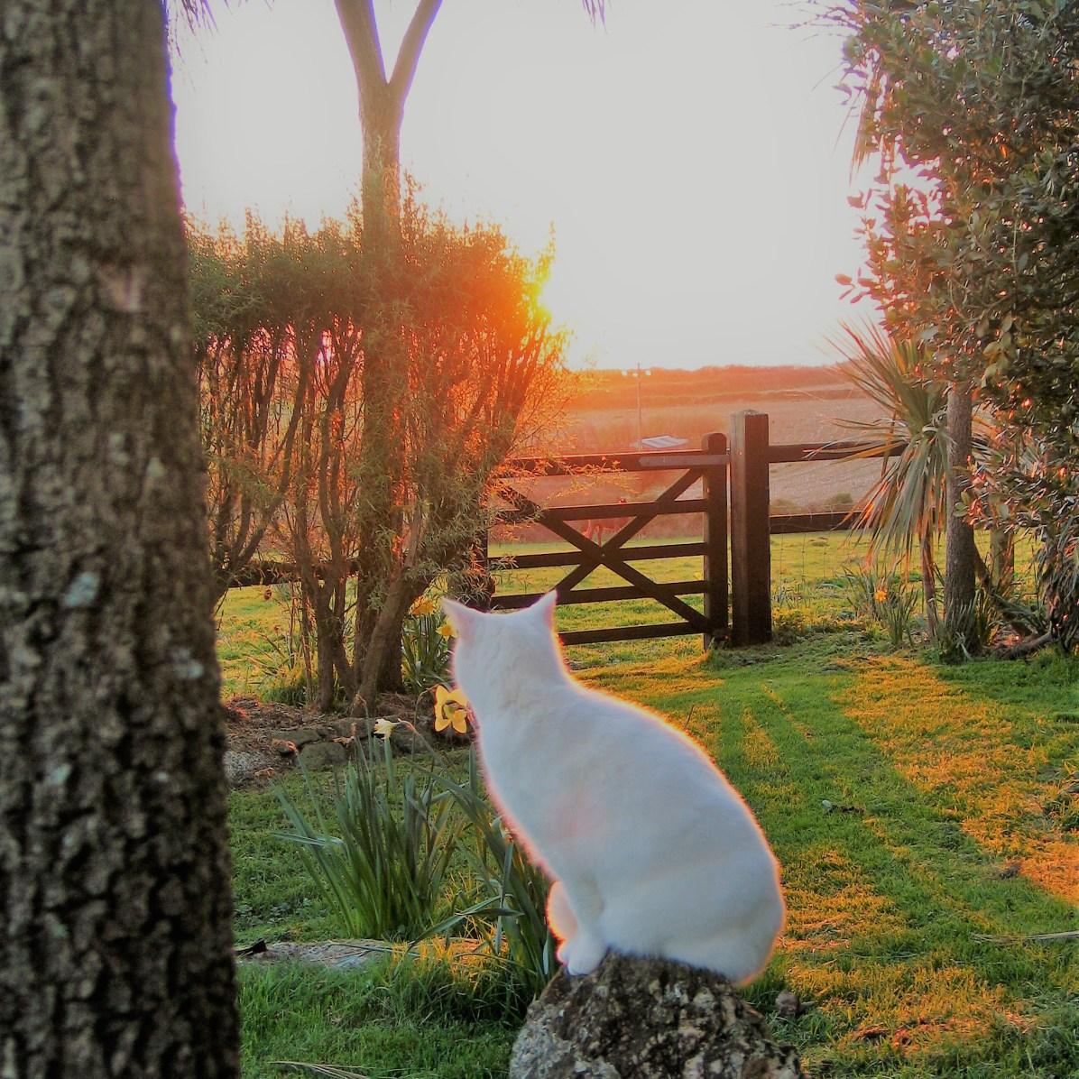 Golden light from the sunset in the garden