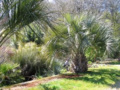 sub tropical garden cornwall