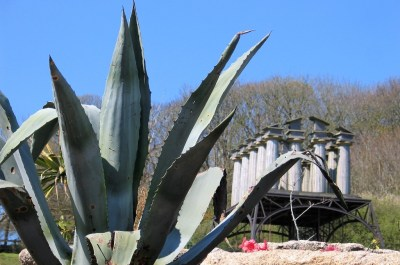 Agave with sculpture at tremenheere sculpture gardnes