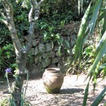 sunlit cobbles below Olive tree with pot