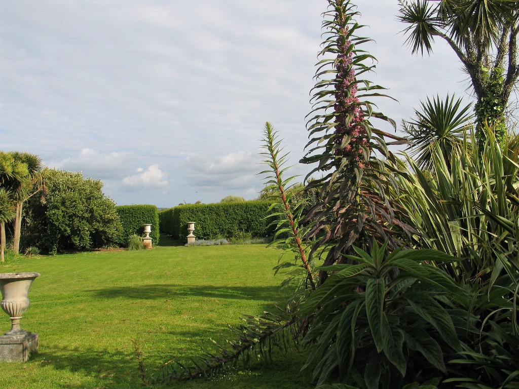 Open lawn framed with echiums