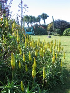 clump forming aloes
