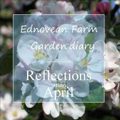 garden diary apple blossom