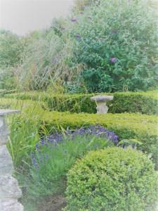 lavender in formal box beds