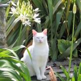 White cat with flower - july garden