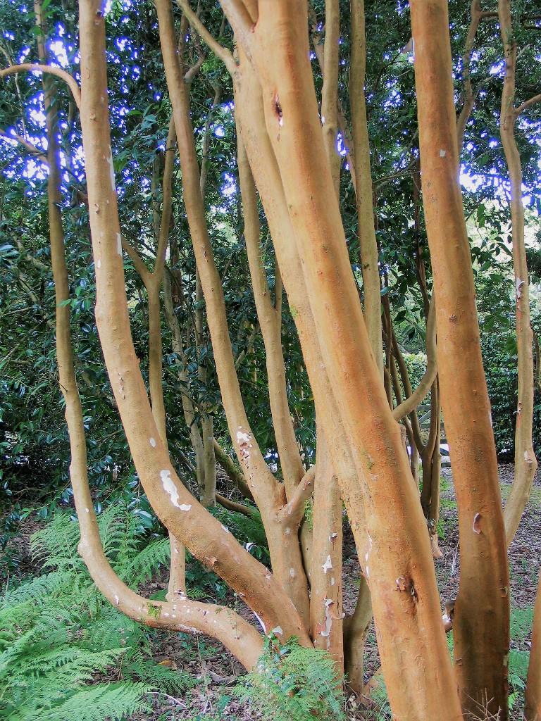 rust red tree bark