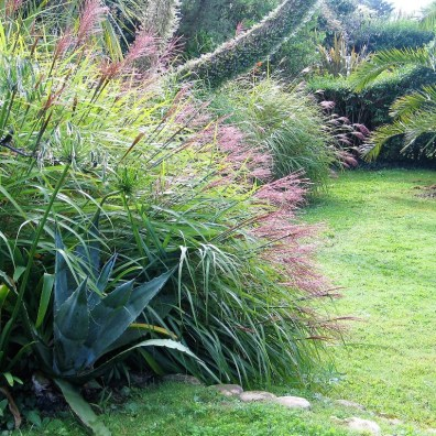 Agave and miscanthus grass