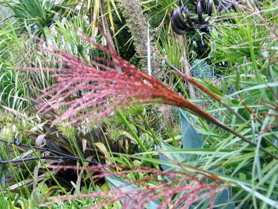 bright russet seed head