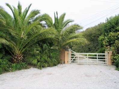 Date Palms flanking a car park