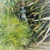 statue in palms - October garden