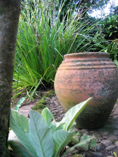 terracotta pot on cobble patio