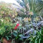 Jungle like growth - Cornish garden
