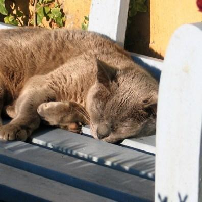Grey cat on blue bench