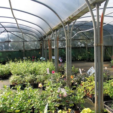 working polytunnel