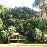 bench below a garden border
