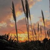 Pampass seeds against a winter sunset - garden diary