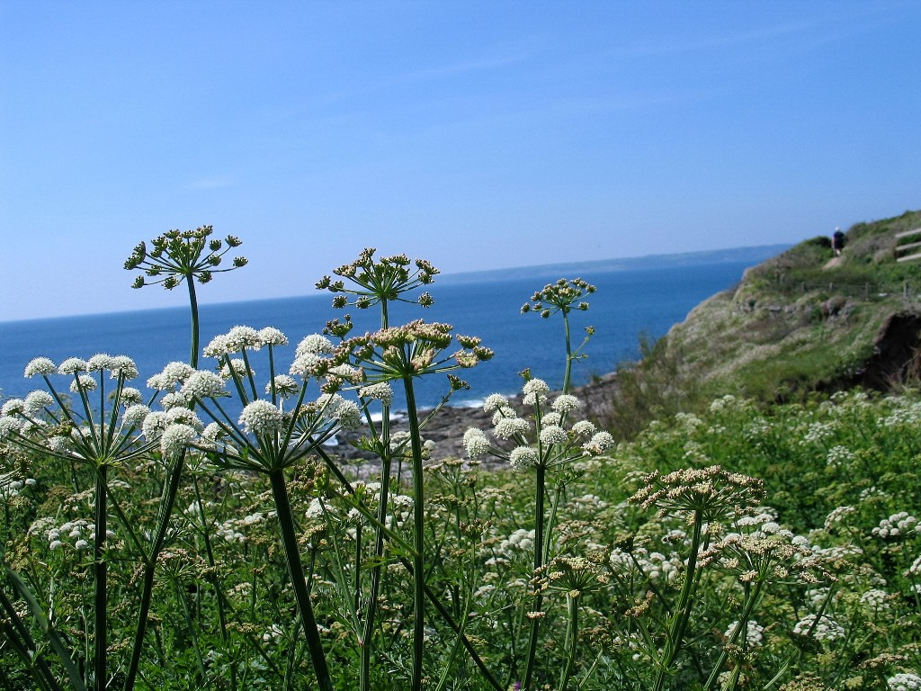 Wild flowers growing on the cliff top - part of the world of Rosamunde Pilcher