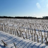 Fallow fileds in the snow 2010
