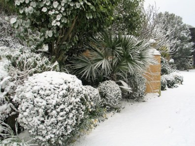 Formal box and flamboyant palms combine at the entrance to Ednovean Farm - snowfall
