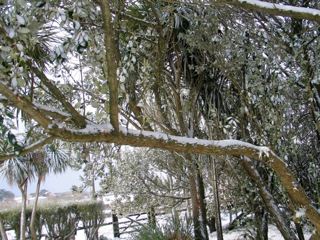 powdery white snow on branches life in the snow