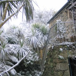 Powdery snow on palm trees beside a traditional granite farmhouse