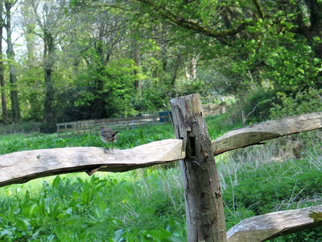 A riven fence on the edge of teh woodland at Godolphin House