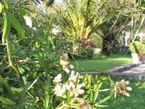 April courtyard glimpsed -garden diary Ednovean Farm