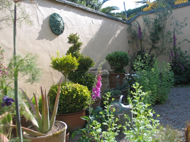 Topiary.succulents and wildflowers in the courtyard