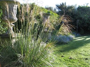 Golden oat Grass - Stipa Gigantea beside an urn - May garden - Ednovean Farm