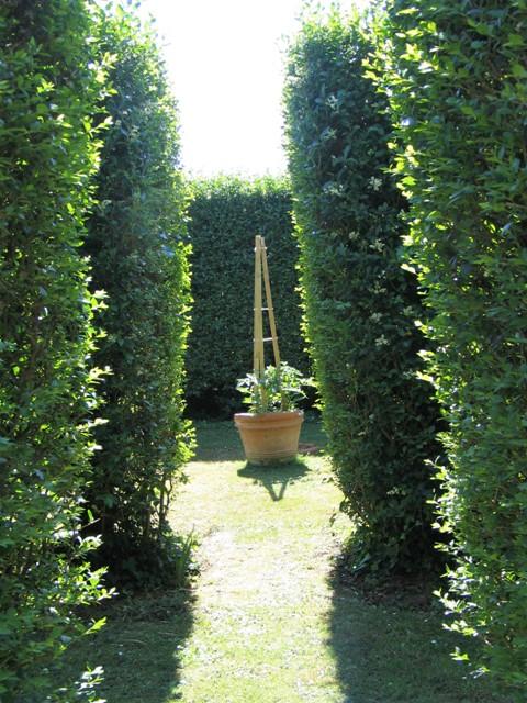 Tomatoes glimpsed through formal garden