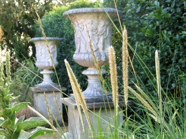 Grass seed heads with urns