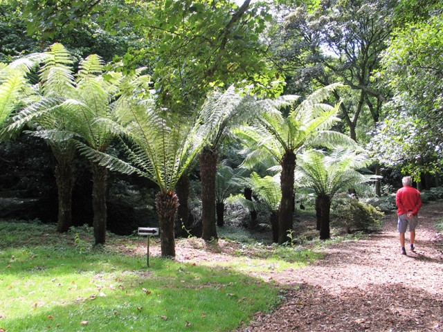 Garden path passed Tree Ferns - Bonython Estate Garden
