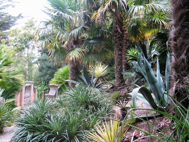 Agaves and Palms - Lamorran Garden