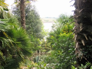 View through palms - Lamorran Garden Roseland Peninsula
