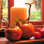 Tomatoes ripening on a windowsill - autumn harvest