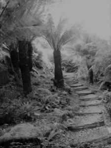 Garden steps winding under tree ferns up a hillside
