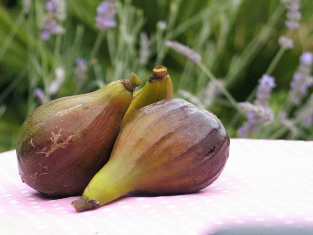 August brought ripened Figs