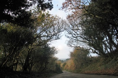 Autumn fades to winter in the cornish lanes