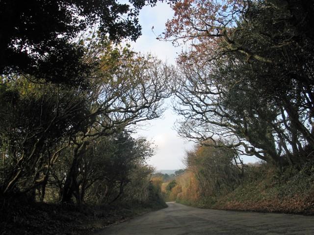 Autumn fades to winter in the cornish lanes