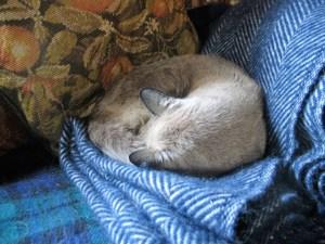 cat curled on cosy woolen throw - Tweedmill