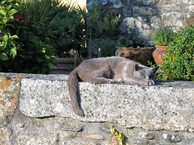 elderly cat sleeping on raised stone wall - courtyard garden
