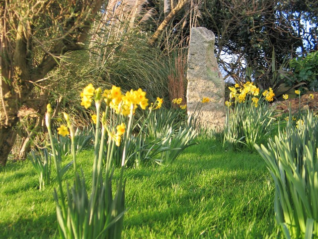 The daffodils return each spring