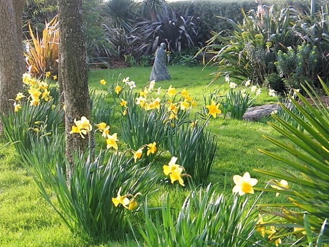Daffodils under palm trees - ednovean farm