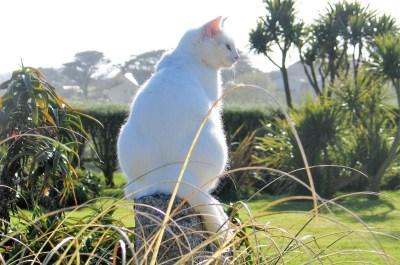 Cat sitting on granite post - garden walk with cat
