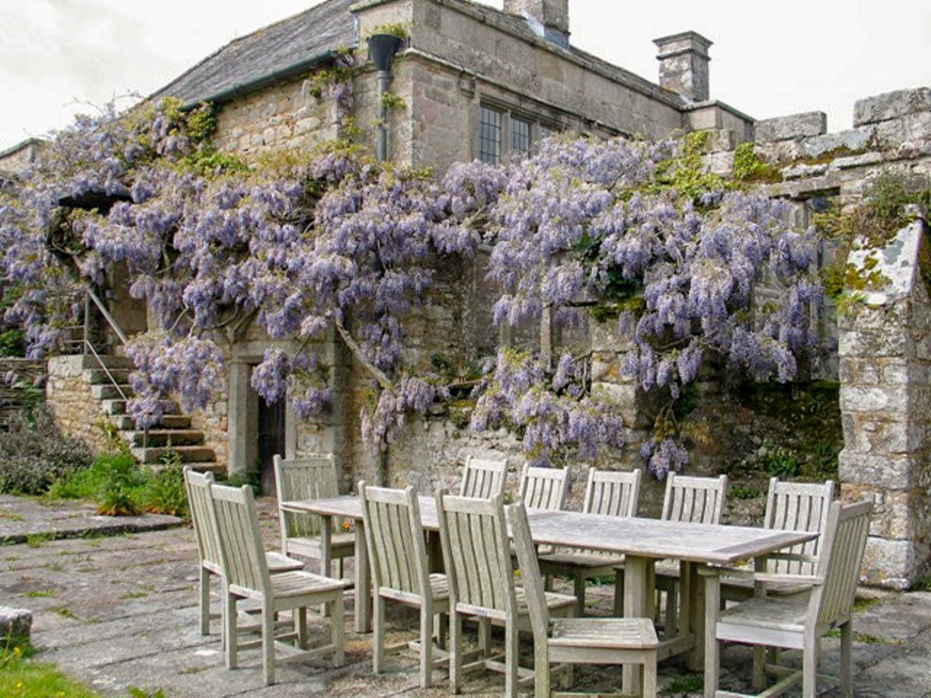 Wisteria beside steps in old courtyard
