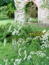 Cow parsley and semi derelict Engine House
