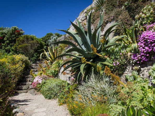 Visit St Michaels Mount Gardens