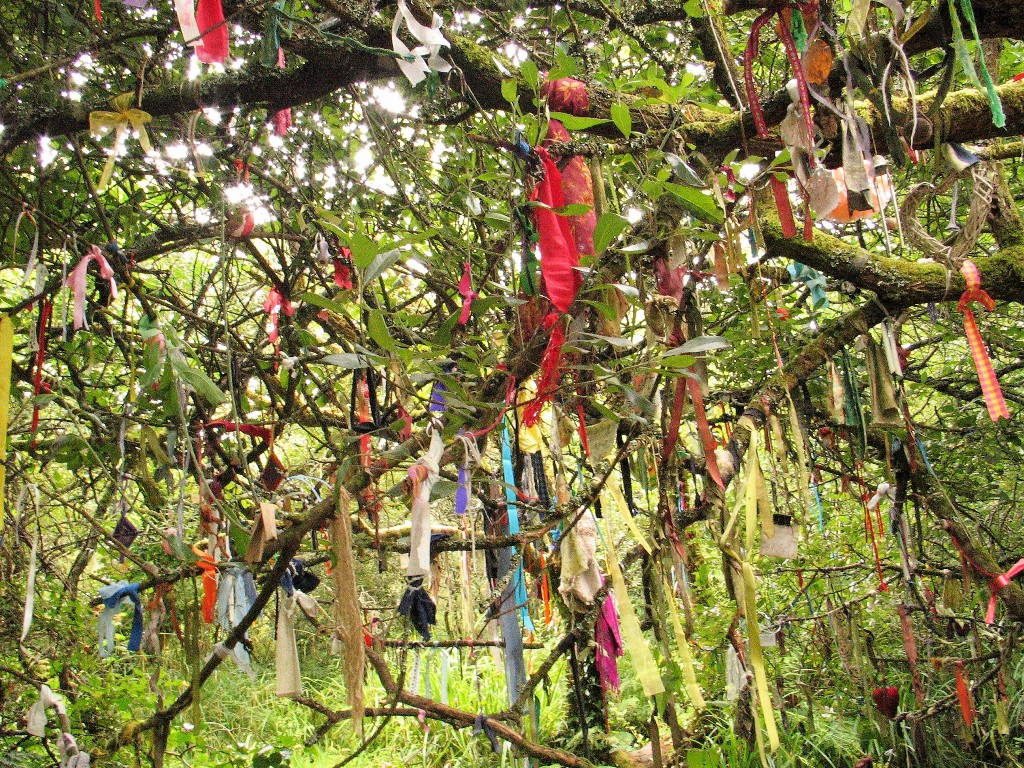 Clouties hanging from a sacred tree at Madron holy Well